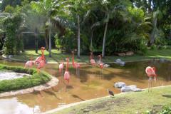 Flamingos01